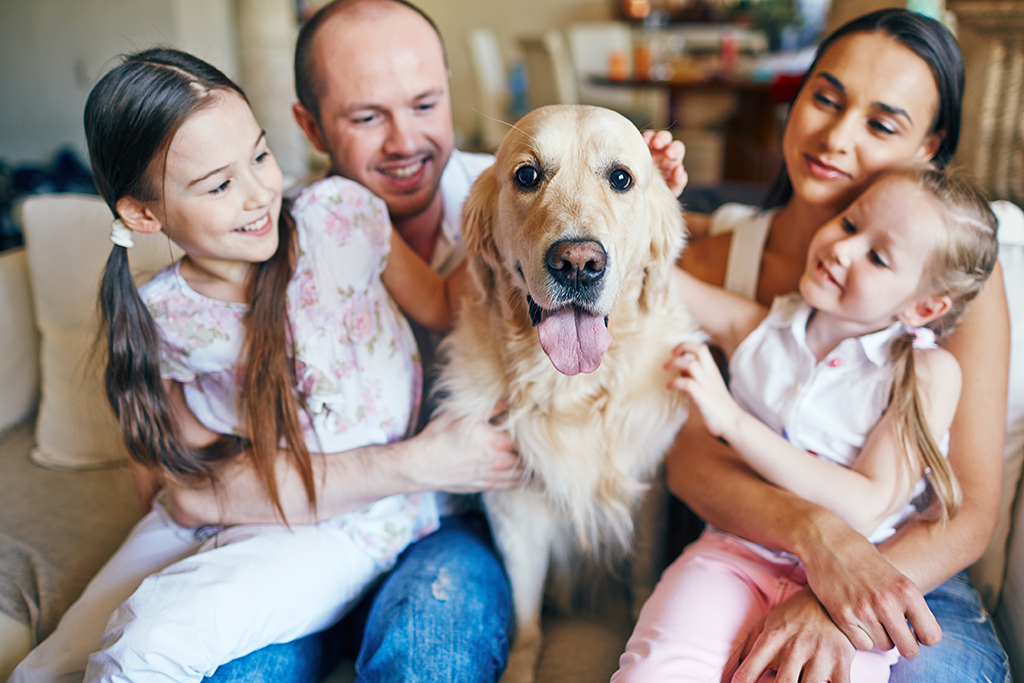 How to Transfer Your Pet to a New Veterinarian After a Move