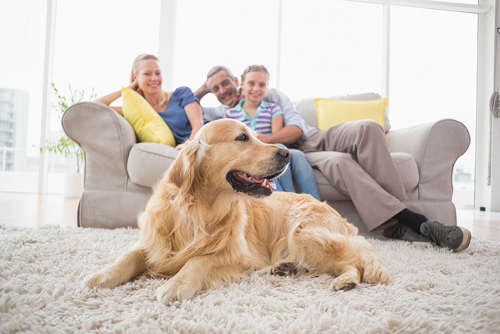 How to Make Your Home More Pet-Friendly