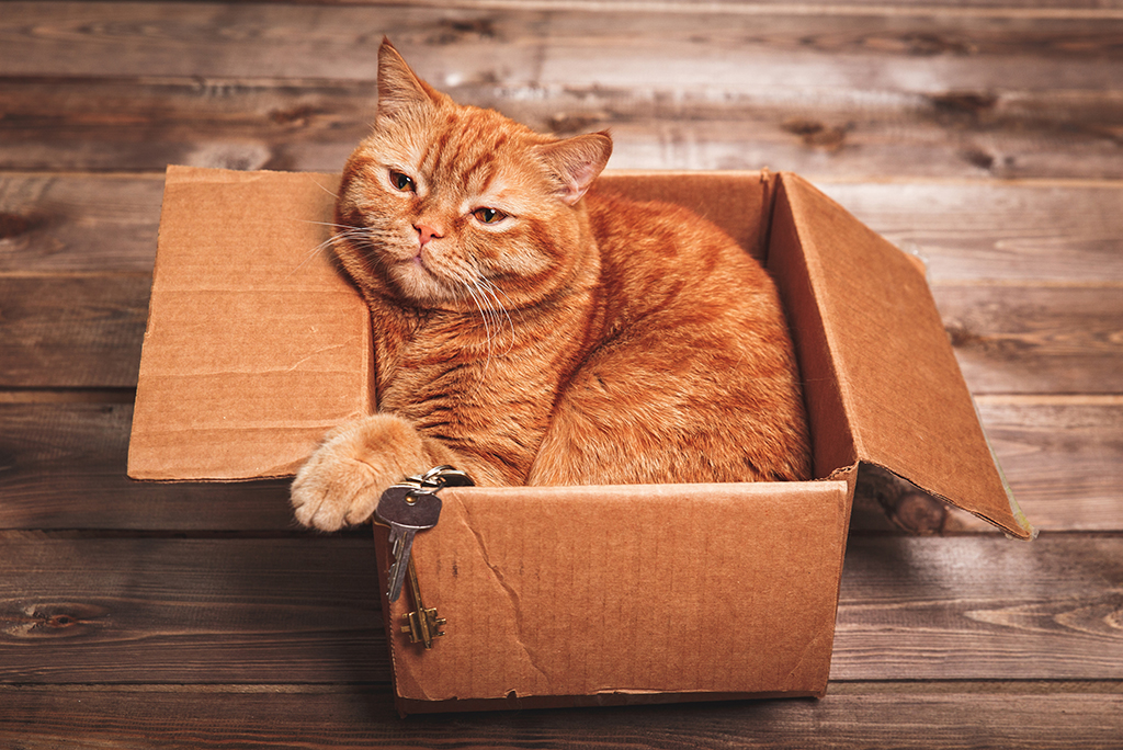 orange cat in box