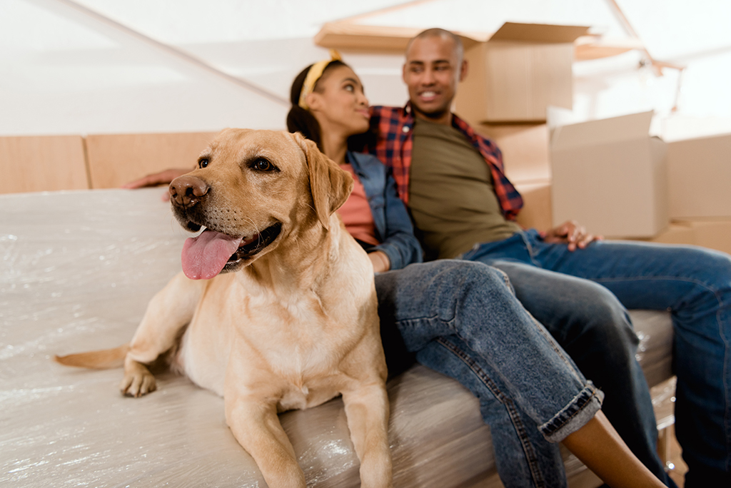 How to Dog Proof Your New Home After Move In