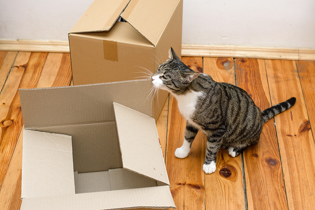 Image result for cats new house move
