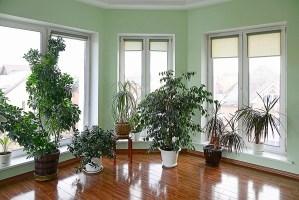 large house plants