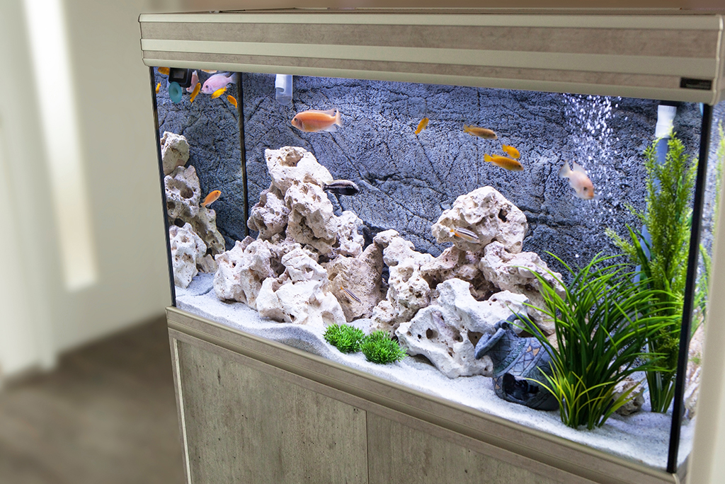 6 Steps to Safely Moving a Fish Tank