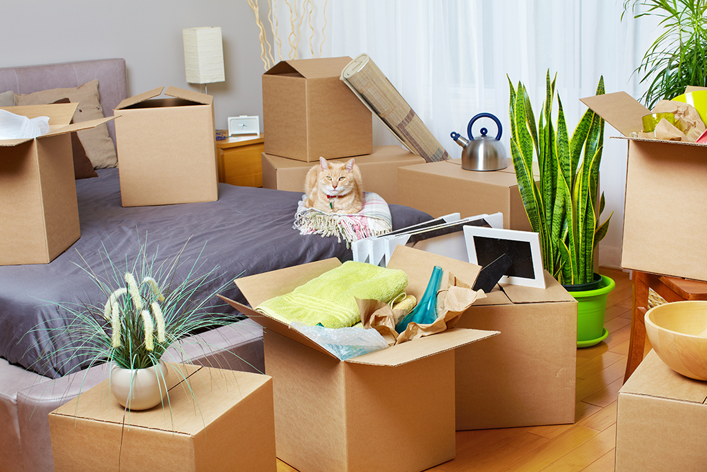 Moving With Cats Cross Country: Tips and Advice