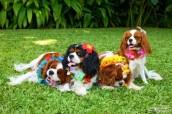 Moving-To-Hawaii-Pets-1