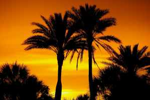 silhouette photo of palm trees