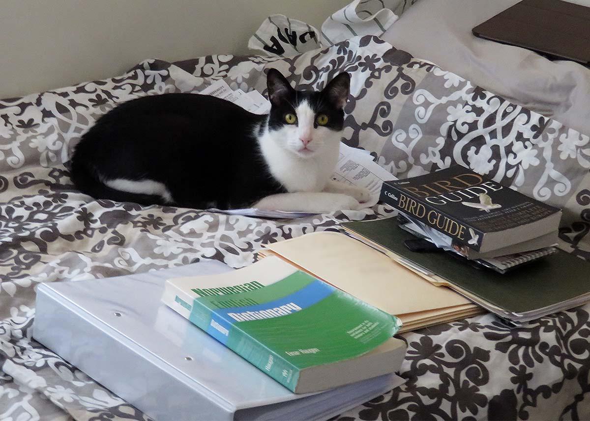 Puss in Books (and Boots) / El Gato con Libros (y Botas)