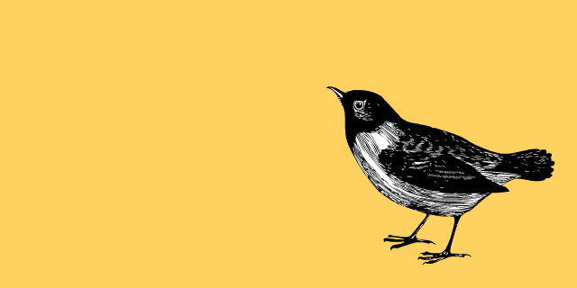 open letter to birds // movita beaucoup