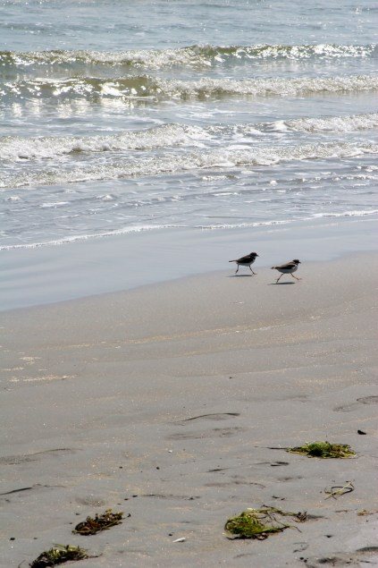 plovers/lovers