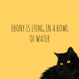 ebony is lying in a bowl of water // movita beaucoup