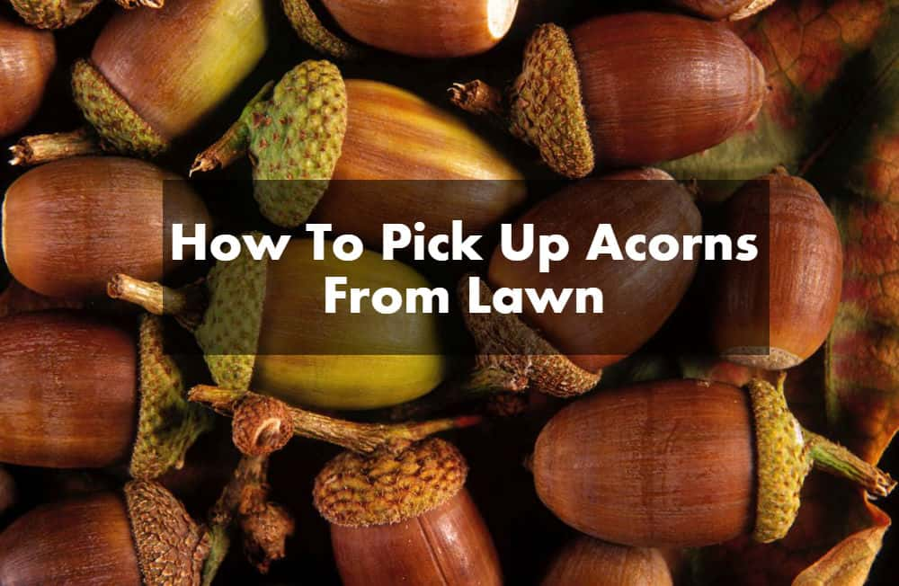How To Pick Up Acorns From Lawn