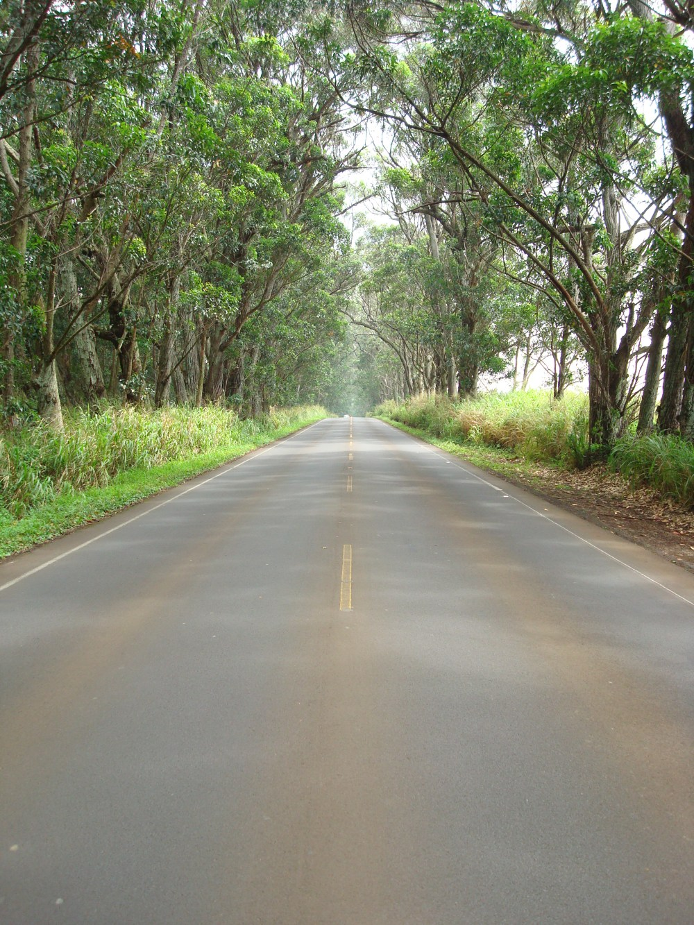 Drive from Lihue to South Shore, and you'll go right through the tree tunnel.