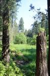 Sequoia National Park 09