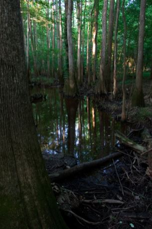 From the Congaree National Park Facebook page.