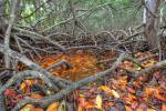 Everglades NP 09]