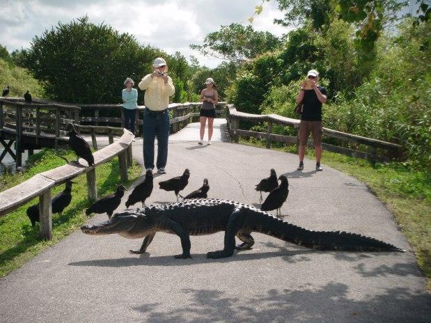 Everglades NP 12
