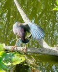 Everglades NP 13