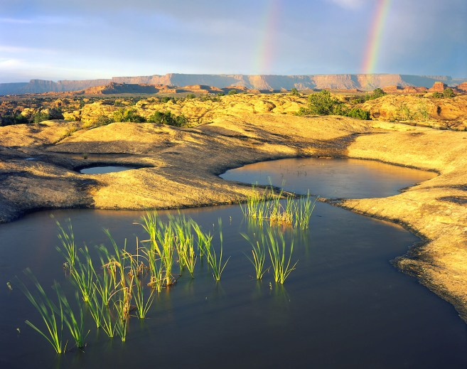 Pothole Point. From the Canyonlands National Park website.