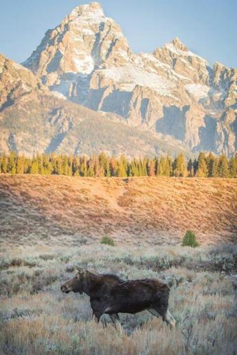A lovely day for a stroll through Grand Teton National Park. Tweeted by the US Department of the Interior, 10/22/13.