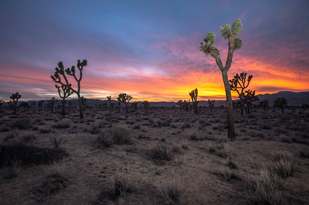 Sunset at Joshua Tree National Park. Photo: Steven Clouse. Tweeted by the US Department of the Interior, 2/2/14.