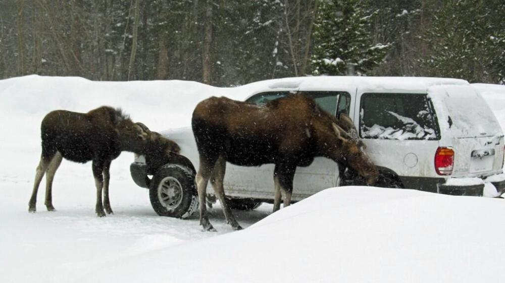 Rocky Mountain National Park. Tweeted by the US Department of the Interior, 2/6/14.