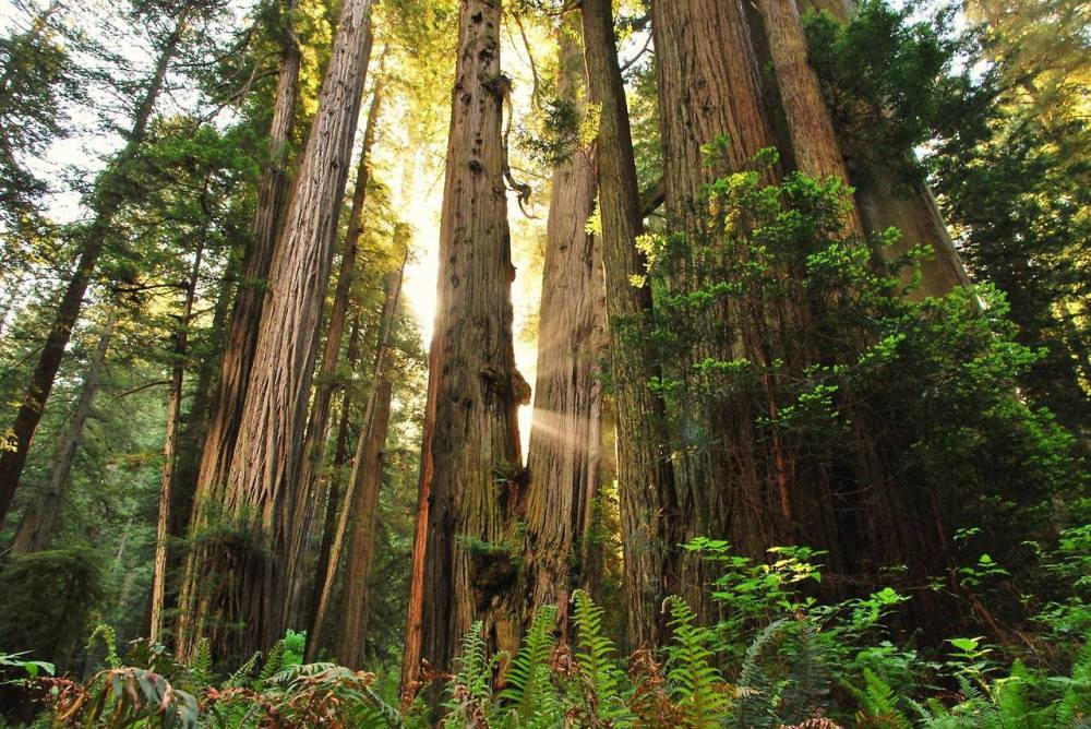 Most people know Redwood National Park in California as home to the tallest trees on Earth. But the parks also protect vast prairies, oak woodlands, wild riverways, and nearly 40 miles of pristine coastline, all supporting a rich mosaic of wildlife diversity and cultural traditions. Together, the National Park Service and California State Parks manage these lands for the inspiration, enjoyment, and education of all people. Photo: Jessica Watz. Tweeted by the US Department of the Interior, 4/25/14.