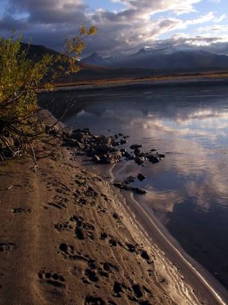 Bear tracks. From the Park's website.