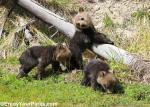 Yellowstone NP 23 – triplets