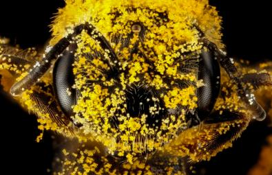 Bee Sweet: Bees pollinate 75% of US fruits, nuts & veggies. Tweeted by the US Department of the Interior, 6/18/14.