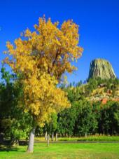 Happy 108th to America's first National Monument, Devils Tower National Monument! On 9/24/1906, President Theodore Roosevelt used the Antiquities Act to create the monument. Photo: C. Velasco. Posted on Tumblr by the US Department of the Interior, 9/24/14.