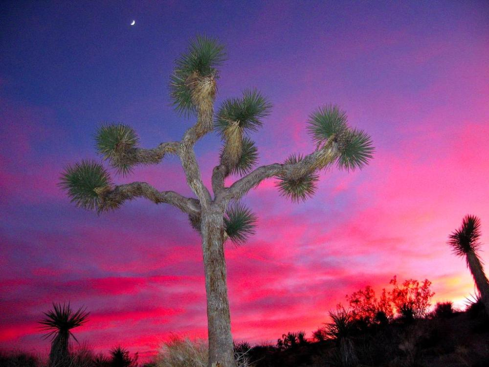 With its 800,000 acres, spanning two deserts and three of California's ecoregions, Joshua Tree National Park offers visitors endless opportunities for exploration and discovery. Pictured here is the park's iconic Joshua Tree. Photo by Robb Hannwacker, National Park Service. Posted on Tumblr by the US Department of the Interior, 12/17/14.