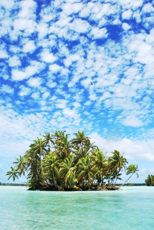 Palmyra Atoll refuge wetlands. Photo by USFWS. Posted on Tumblr by the US Department of the Interior, 2/11/15.