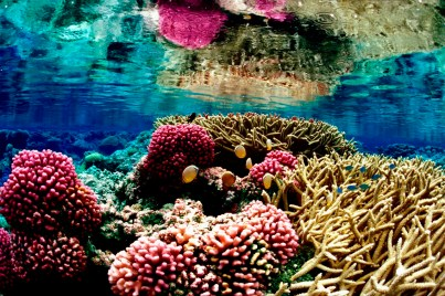 Colorful coral reef ecosystem at Palmyra Atoll National Wildlife Refuge. Photo by Jim Maragos, USFWS. Posted on Tumblr by the US Department of the Interior, 2/11/15.