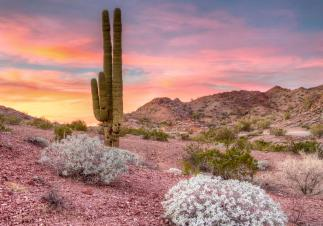 Sunset paints the sky in pastels at Whipple Mountains Wilderness. Tweeted by the US Department of the Interior, 5/20/15.