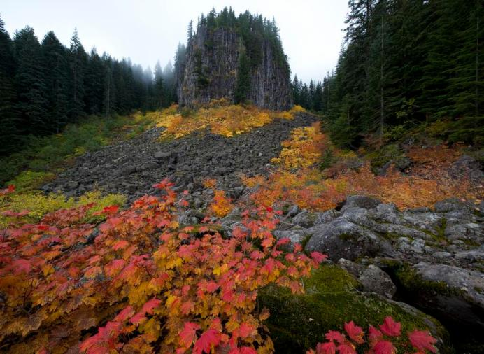 Colorful vine maples adorn the basalt monolith of Oregon's Table Rock Wilderness. A 3.3 mile long trail with a modest grade climbs through stately forest past tall basalt cliffs before topping out at drop-dead gorgeous viewpoints stretching from high Cascade Peaks to the Willamette Valley. Table Rock stands at 4,881 feet above sea level and has a rich forest of Douglas fir and western hemlock, with noble fir at higher elevations. At least two endangered plants bloom here: Oregon sullivantia and Gorman's aster. Deer and elk wander about its slopes, and the northern spotted owl have been seen among the old trees. From four trailheads, about 17 miles of trails give access to the Wilderness. Photo by Bob Wick, BLM. Posted on Instagram by the U Department of the Interior, 6/15/15.