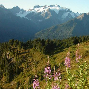 Summer, wild flowers and the Olympic National Park. Tweeted by the US Department of the Interior, 8/19/15.