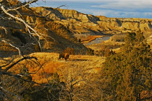 A hidden gem in the Badlands, Theodore Roosevelt National Park stretches across more than 70,000 acres of western North Dakota. The park preserves an area of land that profoundly impacted President Theodore Roosevelt -- who protected approximately 230,000,000 acres of public land during his presidency. The park has become a beacon for nature lovers and outdoor enthusiasts with its abundant wildlife, scenic drives and miles of trails. Photo by Brad Starry. Posted on the US Department of the Interior blog, 10/19/15.