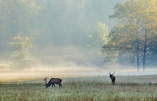 Foggy autumn morning in Cataloochee Valley in the Great Smoky Mountains National Park. Photo by Brian Simpson. Tweeted by the US Department of the Interior, 12/4/15.