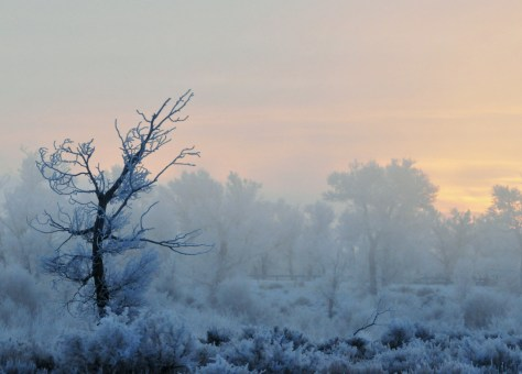 Seedskadee National Wildlife Refuge in southwest Wyoming is an important habitat for more than 250 species of resident and migratory wildlife. The area was used by nomadic Indian tribes, fur trappers and early pioneers. It is rich in history and natural beauty, as you can see from this stunning winter scene. Photo by Tom Koerner, US Fish & Wildlife Service. Posted on Tumblr by the US Department of the Interior, 1/6/16.