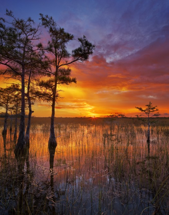 A blazing sunset as a storm breaks up in the Everglades. Dwarf cypress grow in the flooded prairie. Picture taken from the Pa-hay-okee overlook at Everglades National Park in Florida. Photo by Paul Marcellini. Posted on Tumblr by the US Department of the Interior, 2/2/16.