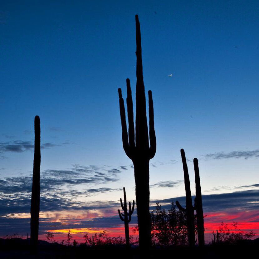 Arizona's Sonoran Desert National Monument at sunset. Tweeted by the US Department of the Interior, 2/25/16.