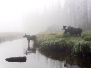 Moose in the mist at Rocky Mountain National Park. Photo by by Aaron Rockefeller. Tweeted by the US Department of the Interior, 5/18/16.