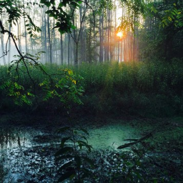 """A dreamy picture of a sunrise along the Ohio & Erie Canal at Cuyahoga Valley National Park in Ohio. Last fall, photographer Wookie Kim went on an epic 45-day trail running road trip, driving to more than 30 national parks – from Cuyahoga Valley to the Grand Canyon – and running a trail each day. Wookie says: """"In all, I ran almost 500 miles of trails, gained 70,000-plus vertical feet, hit 33 states and had one unforgettable experience. It was the trip of a lifetime."""" iPhone courtesy of Wookie Kim. Posted on Tumblr by the US Department of the Interior, 5/25/16."""