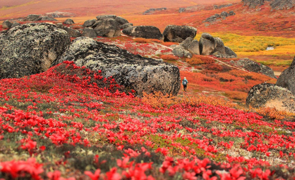 It's that time of year in Alaska when the gorgeous fall colors come out at Serpentine Hot Springs in Bering Land Bridge National Preserve. Gone are the shockingly bright pinks, yellows and purples of summer, replaced by deeper and darker reds, yellows, greens and the beginnings of brown, all of equal vibrancy and beauty. Enjoy the change of seasons wherever you may be! Photo by Katie Cullen, National Park Service. Posted on Tumblr by the US Department of the Interior, 9/17/16.