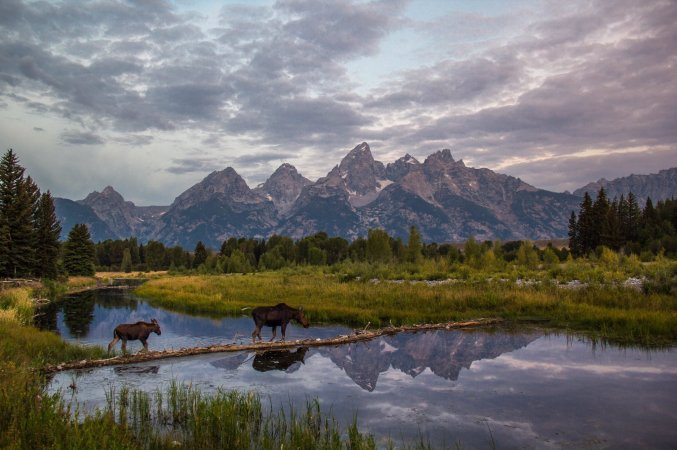 Two moose crossing Snake River in the Grand Teton National Park. Photo by Daniel Cook. Tweeted by the US Department of the Interior, 10/3/16.