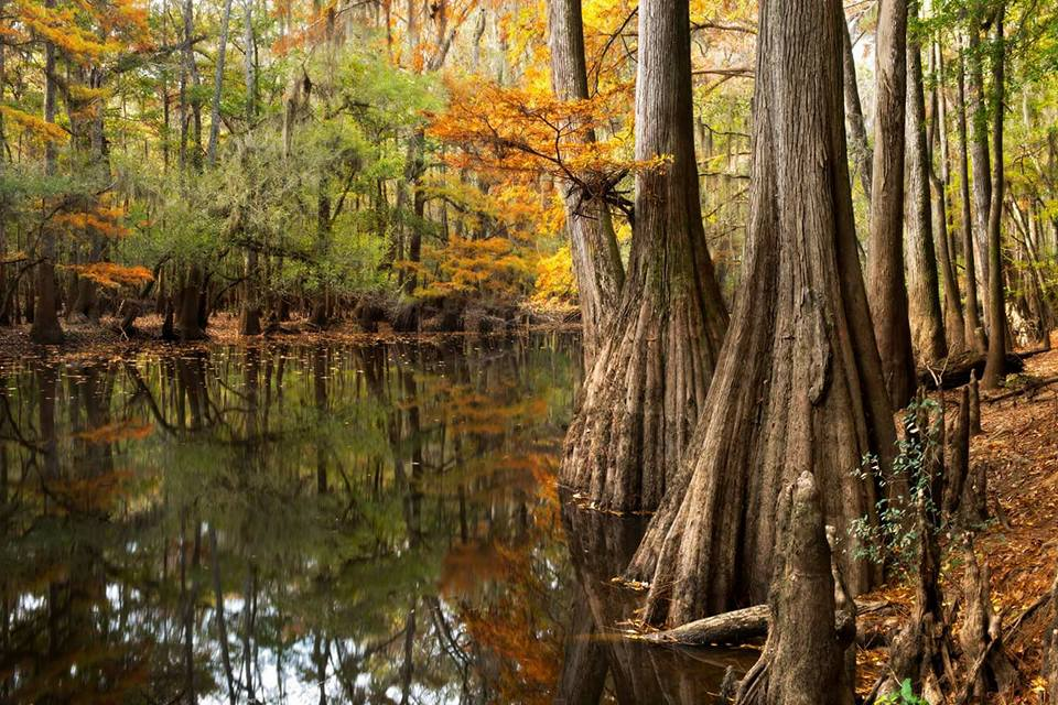 The beauty of South Carolina's Congaree National Park. Photo by James and Jenny Tarpley. Tweeted by the US Department of the Interior, 11/30/16.