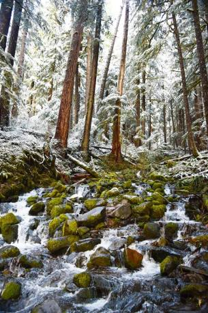 Washington's Olympic National Park. Tweeted by the US Department of the Interior, 12/22/16.
