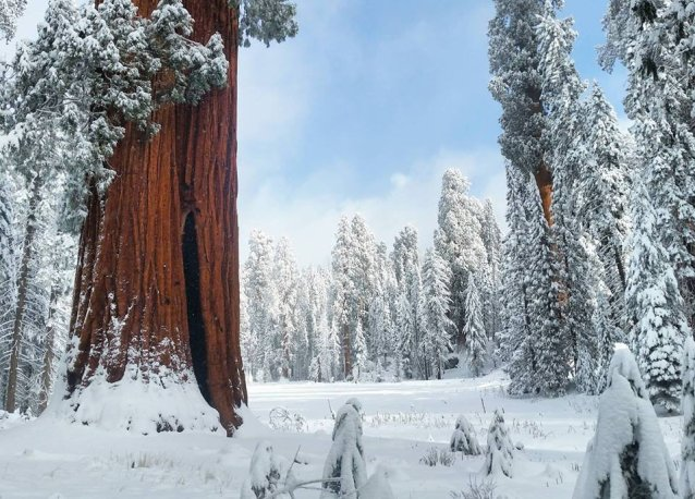 Snowy trees and an open meadow in Sequoia National Park. Tweeted by the US Department of the Interior, 1/15/17.
