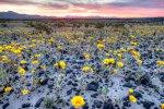 Mojave Trails NM – bloom