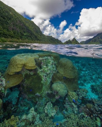 An underwater view of the coral and fish at National Park of American Samoa. Tweeted by the US Department of the Interior, 5/28/17.